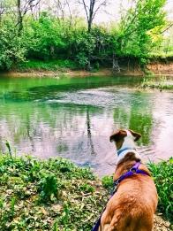 Minnie Pearl enjoying the Dog Life